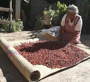 Aumenta la producción con certificado Fair Trade