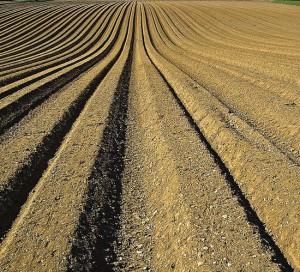 Sector hortofrutícola de España se marchita