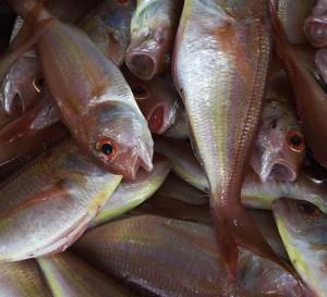 Actividad pesquera, fuente de ingresos y trabajo en Perú