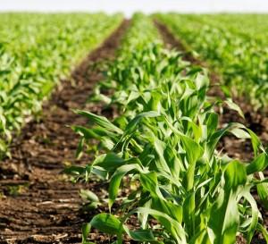 Argentina invertirá 58.000 millones de dólares en el sector agrícola-ganadero