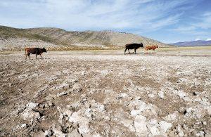 Ganaderos bolivianos piden indemnización para enfrentar sequía e incendios