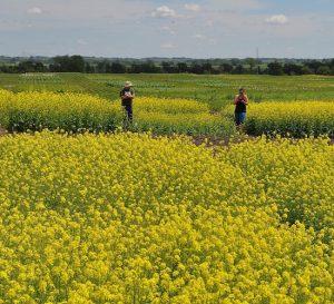 Los agricultores vuelven a ser el motor de la economía argentina