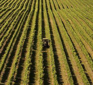 Los alicientes que ofrecen productores agrícolas a inmigrantes en Estados Unidos