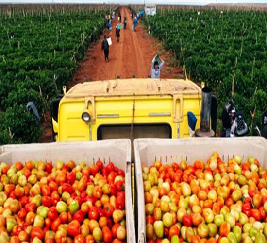 Sector agroalimentario de Estados Unidos sufre el cobro de aranceles