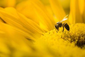 Por la lucha contra el hambre, FAO insta a defender a las abejas